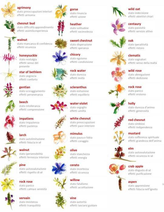 fiori di bach upfarma